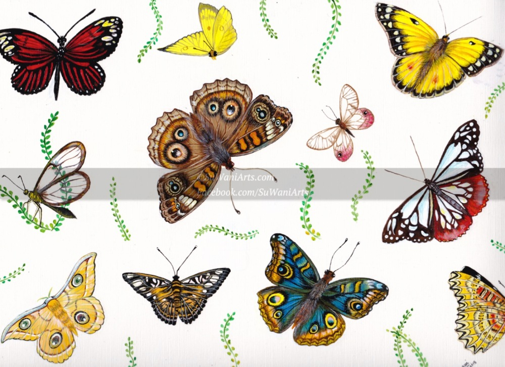butterfly_20pct