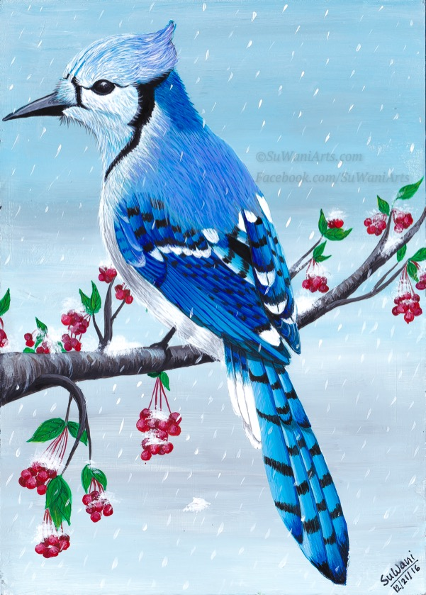 blue-bird-in-snow_20